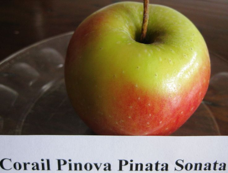 There is something fantastic about apple harvest season-the massive scented bins at farmers markets and wonderful apple festivals where they highlight new or heritage varieties. http://www.awhiterockgarden.com/2014/10/after-apple-picking-6-varieties-to-try.html
