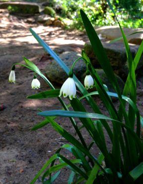 Riverbank blooming