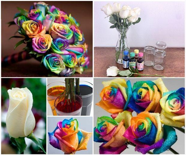 rainbow-roses-F