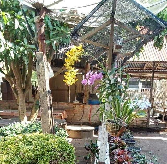 Foto Bunga Taman Rumah Inilah Taman Bunga Di Rumah Saya Yang Di Kombinasikan Oleh Istri Taman Depan Rumah Dengan Pot Bunga Yang Kere Bunga Menanam Pot Tanam