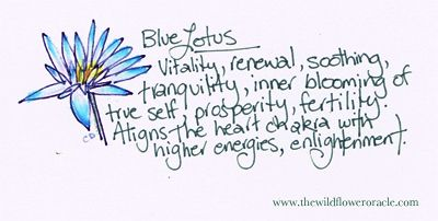 Blue Lotus Flower  The Wildflower Oracle Message