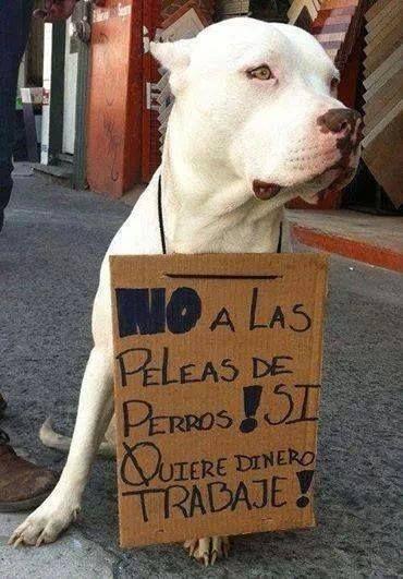 No a las peleas de Perros! Si quiere dinero Trabaje!