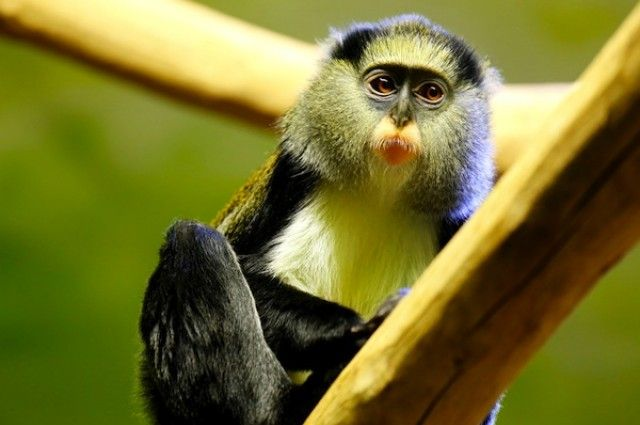 monkey approves - Google Search