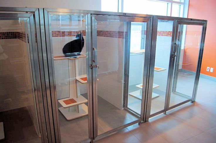 Our Incredibly Roomy Cat Enclosures Cages Great For Cat