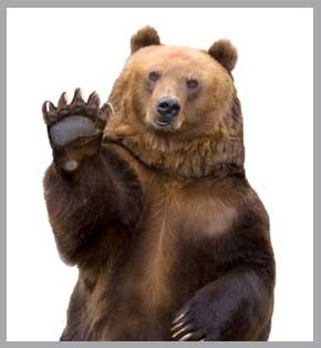 firstsnowflake-border: Forests, Respect Natural, Animal Creatures Critt, Cases, Stay Safe, Bears Country, Brown Bears, Bears Countlri, Bears Posters