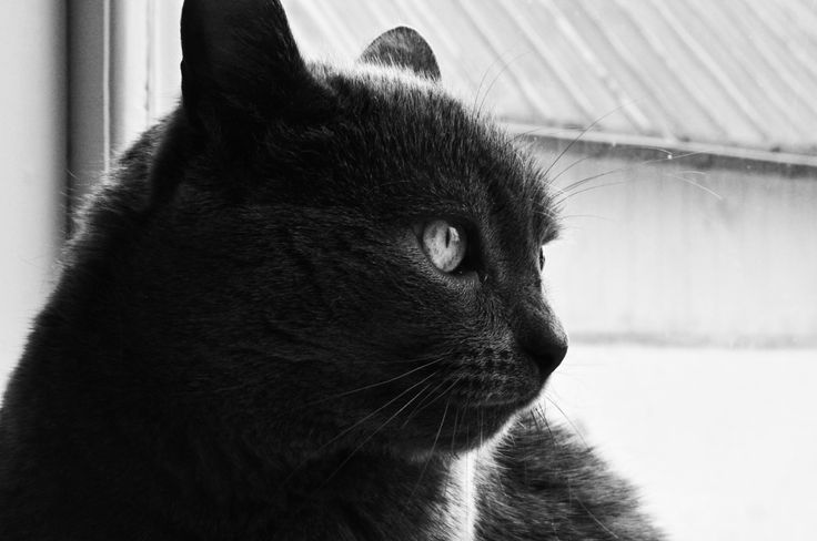 Cat 3.