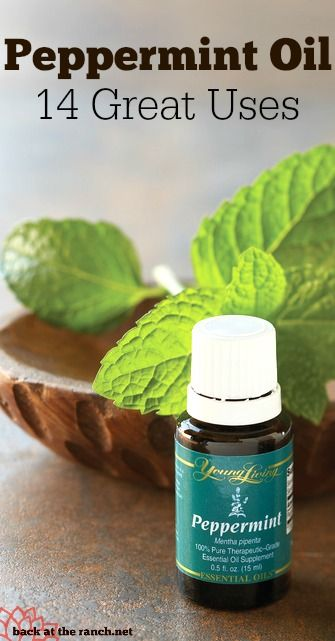 So many uses for Peppermint oil, some you've never heard of.  | http://backattheranch.net