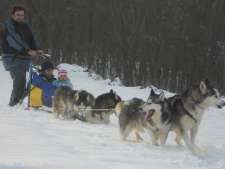 Workaway in . Help with huskies and around the garden and house