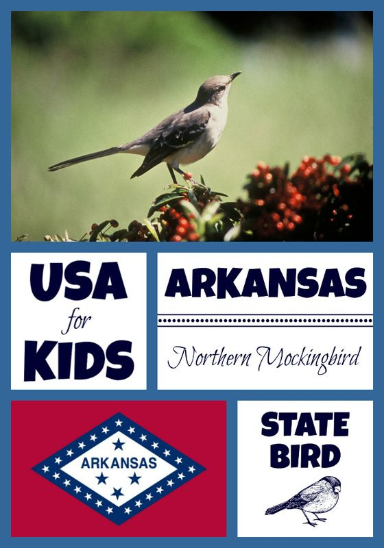 150 best USA State Birds images