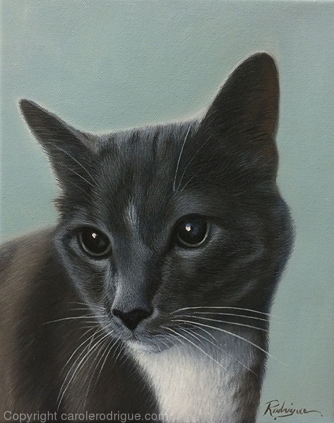 Indy , Cat Painting by Carole Rodrigue Oil ~ 10 x 8  #catpaintings #pets #petlovers #catlovers #realisticcatpaintings #petportraits #petartists #petpainters #giftsforcatlovers