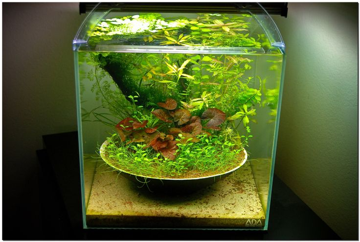 Post your favorite aquascapes natural inspirations and for Natural fish tank