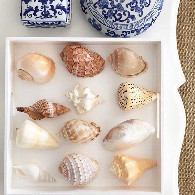Seashells. Coastal style vignette.