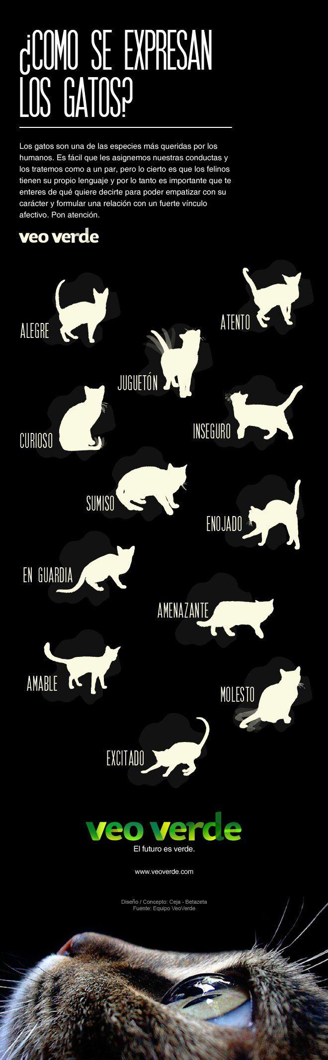 Como se expresan los gatos? [Infografia]                              …                                                                                                                                                                                 Más