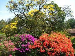 Boganvilla in Kandy, Sri Lanka. For individual tours (german, english) please contact us  susantha2803@gmail.com