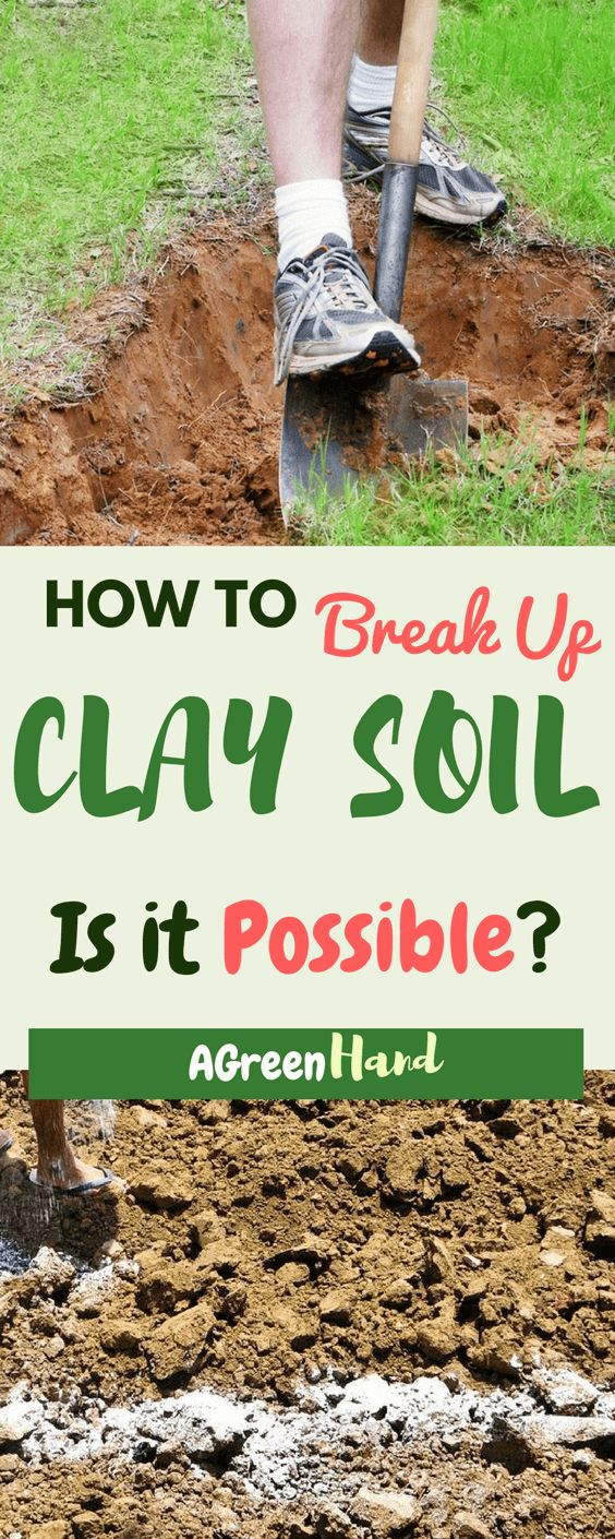 Once you know how to break up clay soil, you can plant almost any crop that you want to have in your garden. And with all the advantages that come with clay soil, you can always be confident of having some healthy and fast growing plants.