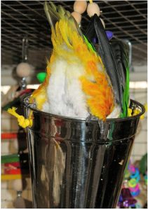 Foraging and Enrichment ideas from Phoenix Landing Parrot Rescue.