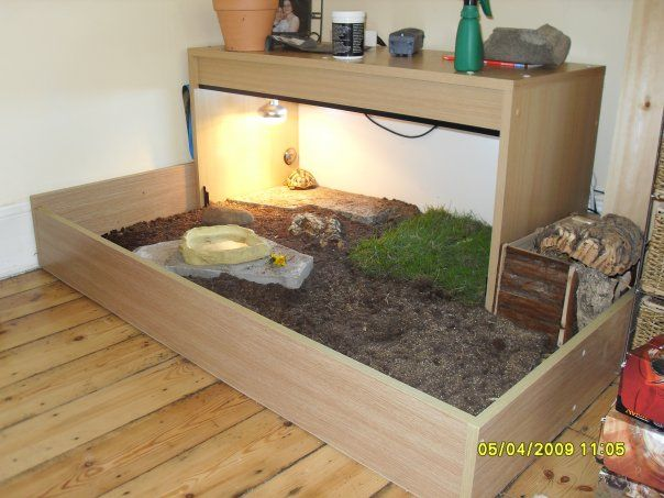 Russian Tortoise Table idea for my future Russian tortoise Tortellini
