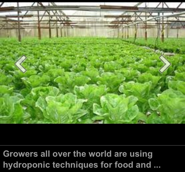 17 best images about hydroponic gardening on pinterest for Best fish for hydroponics