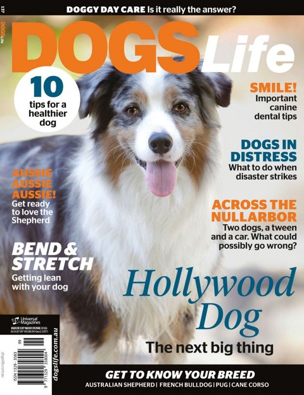 Our latest issue is finally here! Get your paws on a copy at your local newsagent or online at https://www.universalshop.com.au/dogs-life-magazine-subscription?search=dogs%20life  #dogslifemag #newissue #magazine