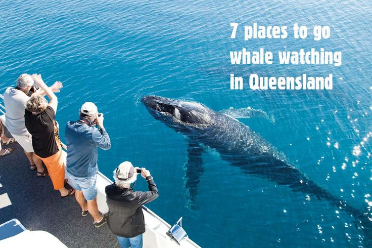 Hervey Bay is the whale watching capital of Australia but there are also plenty of opportunities to see whales in their element all along the Queensland coast. Here are seven locations to go whale watching in Queensland.