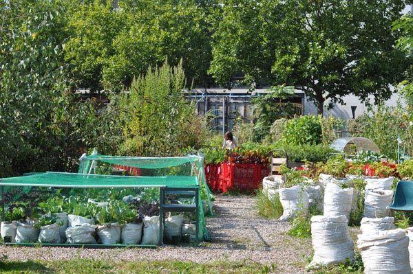 urban gardening at prinzessinnengarten in kreuzberg berlin berlin pinterest. Black Bedroom Furniture Sets. Home Design Ideas