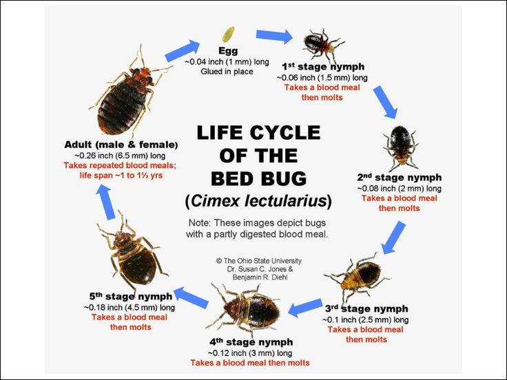 top 25+ best treatment for bed bugs ideas on pinterest | bed bug
