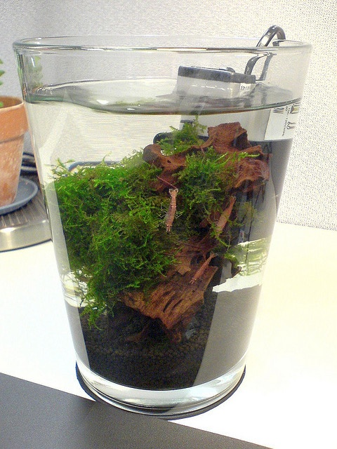0.5 gallon tank with shrimps #fishtank | Photo by #swordw #flickr | CC BY-NC-SA 2.0 http://creativecommons.org/licenses/by-nc-sa/2.0/deed.de