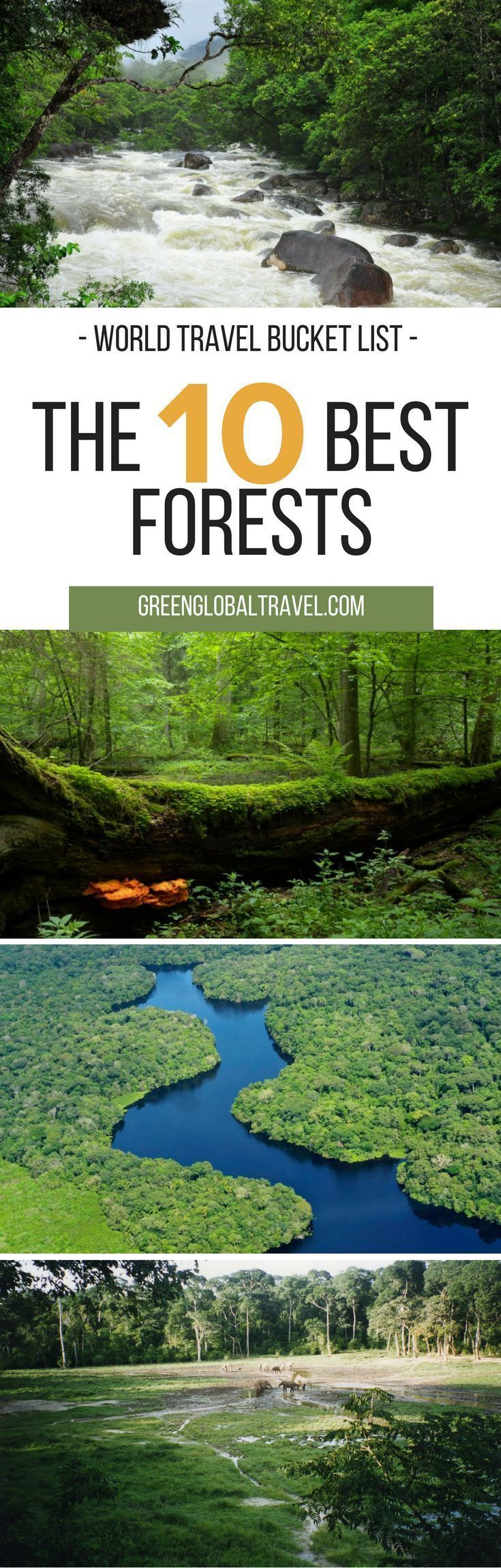 Here are our top 10 most beautiful forests for your world travel bucket list! | Amazon Rainforest | South America | Biodiversity | Bialowieza Primeval Forest | Congo Basin Forest | UNESCO | Europe | Daintree Rainforest | Australia | Forests of New Guinea | Miombo Woodlands | Africa | Sequoia Forests | USA | Sumatra Rainforest | Tiaga Biome | Asia | Valdivian Rainforest |