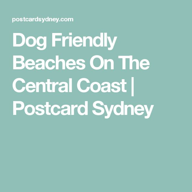 Dog Friendly Beaches On The Central Coast | Postcard Sydney