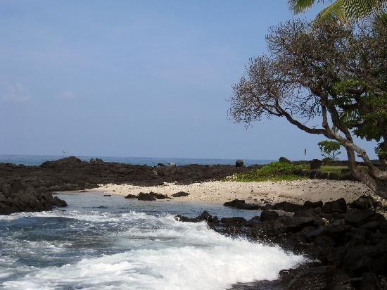Kona Coffee Farm Big Island Tripadvisor