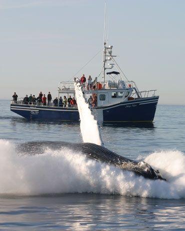 Whale Watching in Brier Island, Nova Scotia, Canada