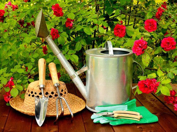 Furor por la jardinería: cuáles son las mejores plantas para el balcón - Infobae Gardening Photography, Diy Bench, Garden Boxes, Seed Starting, Diy Patio, Watering Can, Wooden Tables, Garden Art, Healthy Recipes