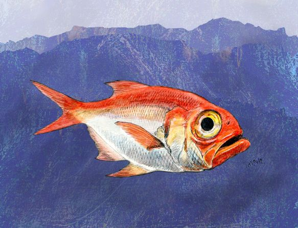キンメダイは水深200m〜800m位に住んでいる深海魚です。海底にも陸上と同様、深い谷がありそして山もあるんです。光はほとんど届かない真っ暗闇でも食物は食べな...|ハンドメイド、手作り、手仕事品の通販・販売・購入ならCreema。