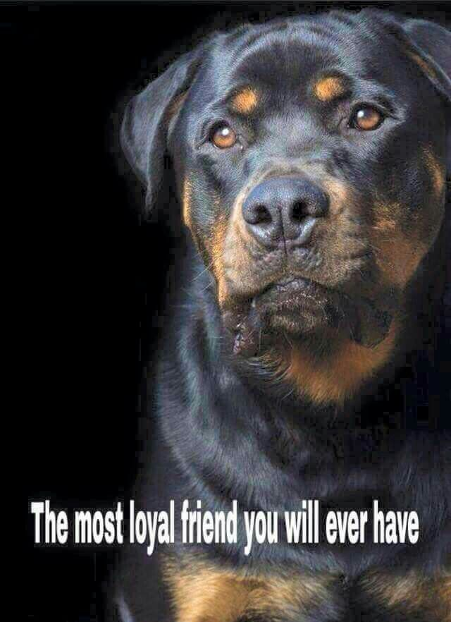 I know from all the rotties i have known this is very true...