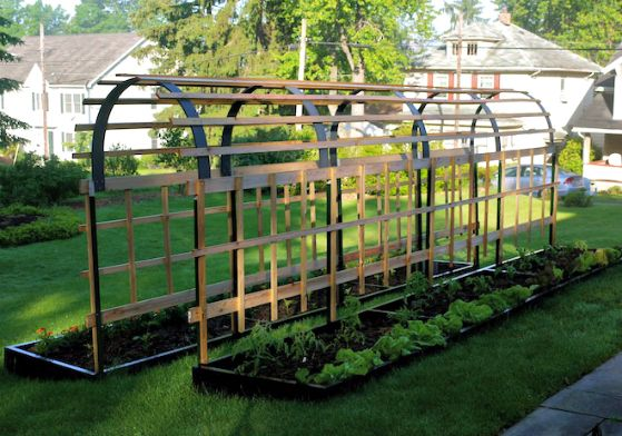 How to build a trellis plan for vertical tomatoes for Vegetable garden pergola