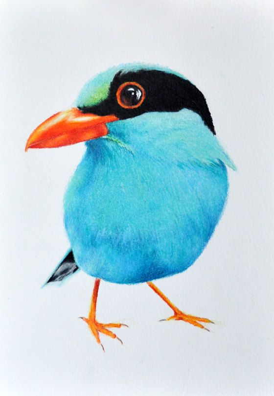 Exotic Blue Bird Original Colored Pencil drawing by ...