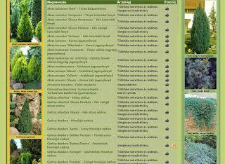 Újdonság: WEBLAP TERMÉKCSOPORTOK, http://kertinfo.hu/weblap-termekcsoportok/, ezekben a témakörökben:  #bogyósgyümölcs #Borhykertészet #díszcserje #díszfa #díszfű #Díszkert #egynyári #évelő #Fák #gyógy-ésfűszernövény #gyümölcsfa #Kert #Kéziszerszámok #Konyhakert #Konyhakertieszközök #Mag #mediterrán #örökzöld #szobanövény #Vetőmag #virághagyma #vízinövény #Zöldfal, írta: Borhy Kertészet