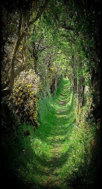 Mondások: Föld - A fák a tüdőnk, a folyók a vérkeringésünk, a levegő a levegőnk és a föld, a Föld a testünk… (Németh György)