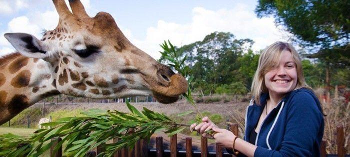 Top 10 Things to do Sunshine Coast 7 Surrounds: #2 Australia Zoo