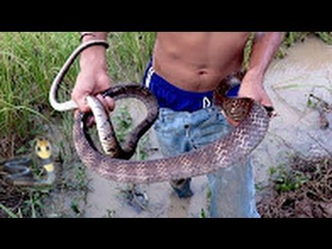 Wow! Amazing Children Catch Water Snake|   How to Catch & Cook Water Sna...