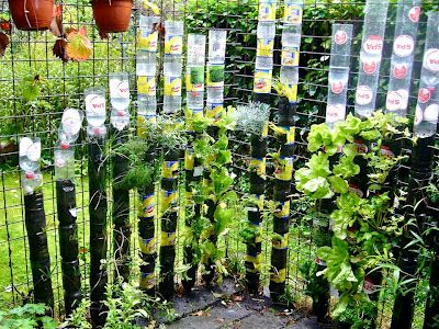 Five Ways to Grow Edibles Vertically   Permaculture Magazine -school garden-for covering brick walls?