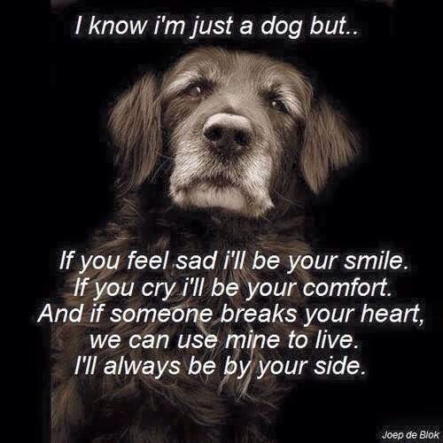 3/11/2015. For the love of dogs So many comments about these beautiful words. I am sure everyone feels like I do when I read them.