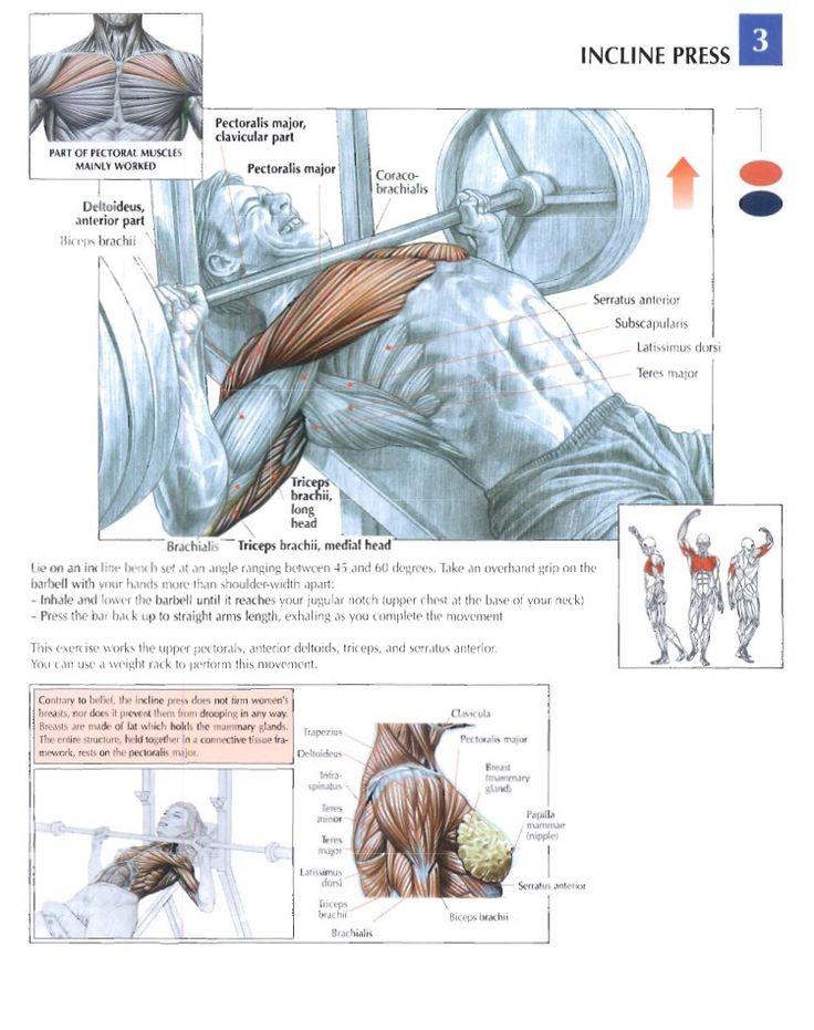 Wunderbar Chest Workout Anatomy Fotos - Menschliche Anatomie Bilder ...