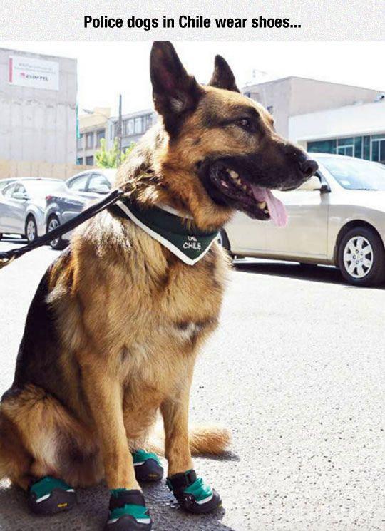 Miami Guard Dog Training