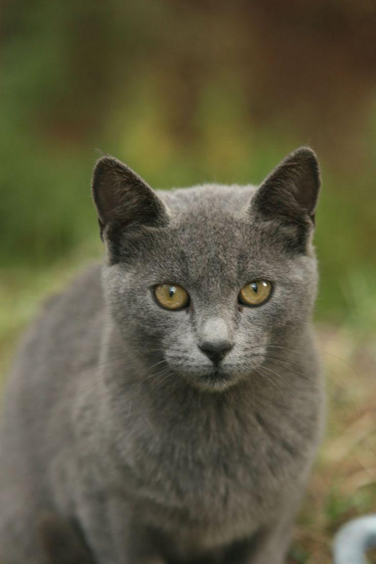 gray kitty cats | gray cat 2 by cappon on deviantART