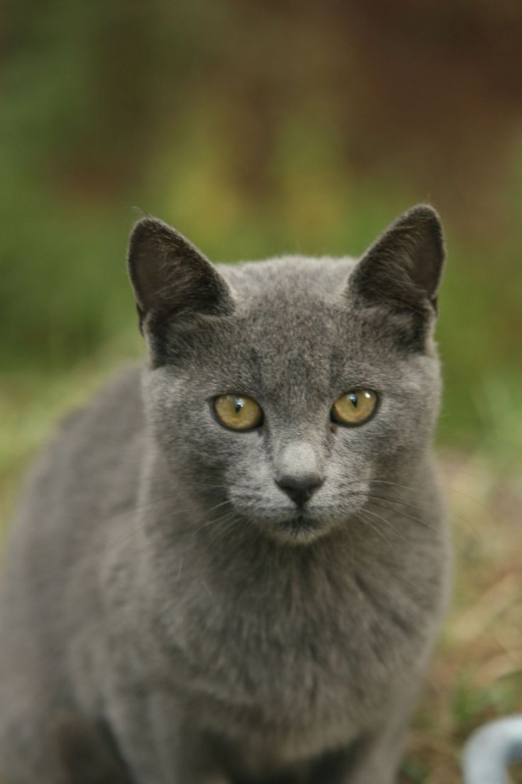 gray kitty cats | gray cat 2 by cappon on deviantART