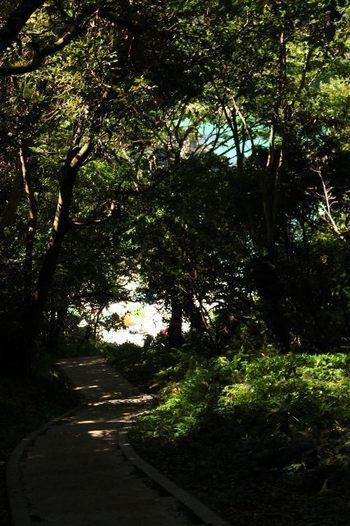 特筆したいのは、ビーチへのアプローチの面白さ。  「九十浜海水浴場」へは、高台にある爪木崎自然公園の駐車場から、鬱蒼とした林の中にある階段を降りて行きます。