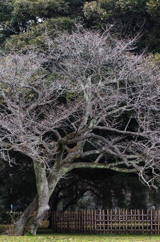Kyoto, Japan 京都御苑  (Photo : Gallery I) https://www.facebook.com/Kyoto.GalleryI?ref=br_rs