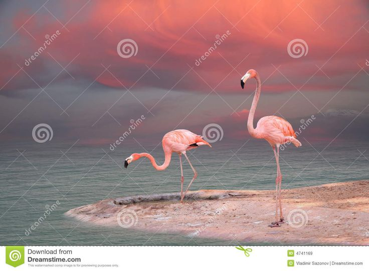 pink-flamingo-4741169.jpg (1300×957)