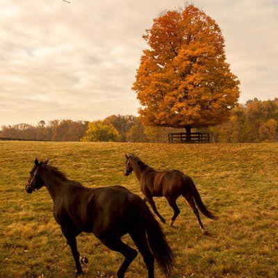 Visit the Horses of Lexington